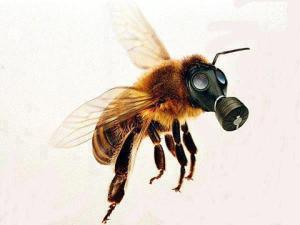 gas masked bee
