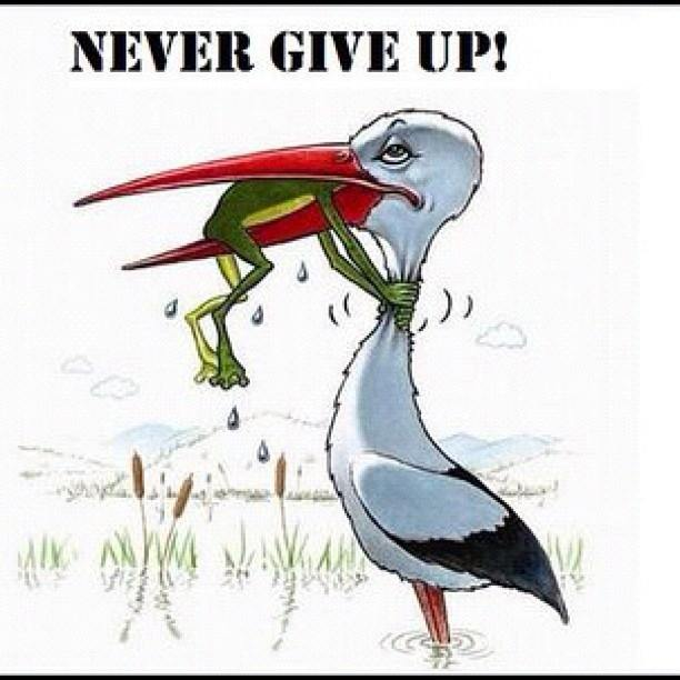 never give up frogs