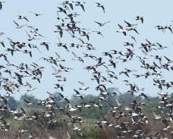 hopeless the enchanted birds of texas